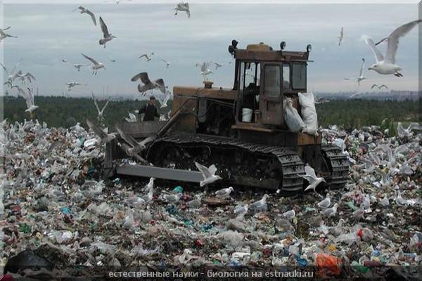 Экологические проблемы Украины Минфин тотальное химическое загрязнение окружающей среды Для сохранения создаются природно заповедные территории редкие и исчезающие виды заносятся в Красную