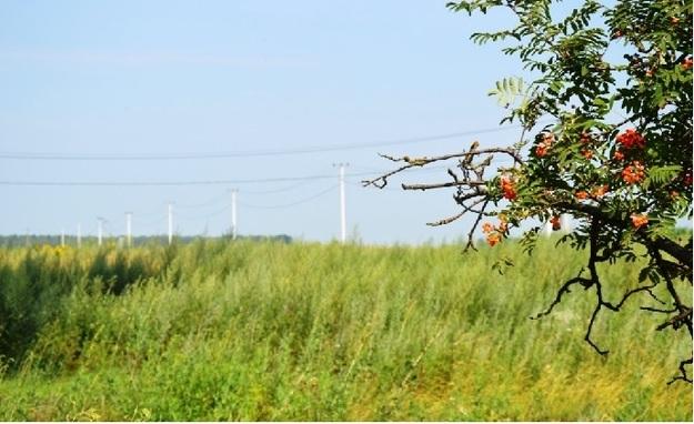 Каждый украинец может получить от государства землю под ведение фермерского хозяйства, садоводство, для строительства дачи и гаража.